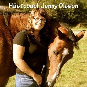 Hästcoach Jenny Olsson svarar på dina frågor om naturlig hästhantering natural horsemanship Ställ din fråga till hästcoachen hos Horse4Harmony på facebook.